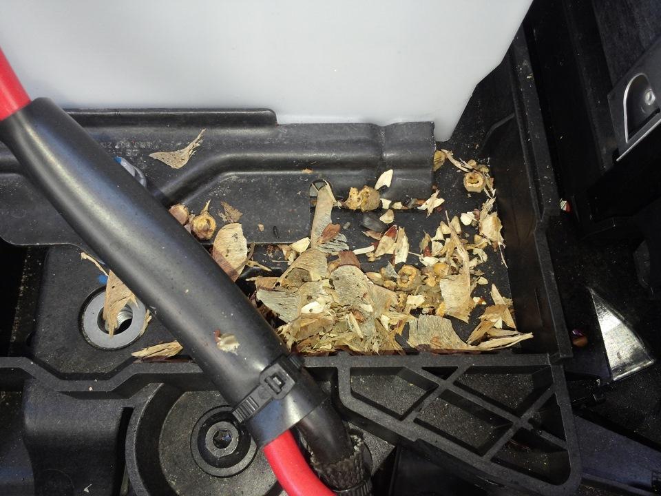 """Самка мыши собрала """"стройматериал"""" для сооружения гнезда - это чревато выходом из строя узлов авто"""