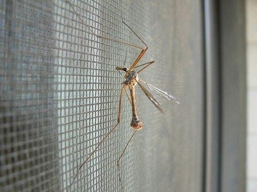Антимоскитные сетки на окнах и балконных дверях защитят Вас от комаров