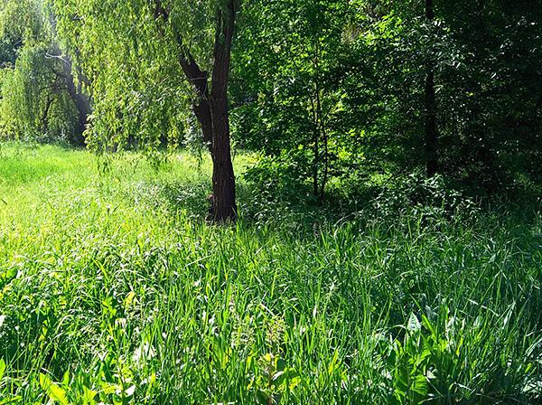 Влажные заросли травы и мелкого кустарника - излюбленное место обитания клещей.