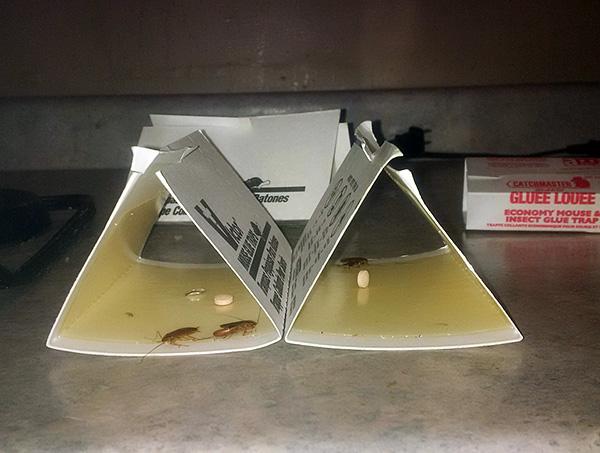 Как дополнительное средство от тараканов, специалисты служб дезинсекции иногда используют липкие ловушки.