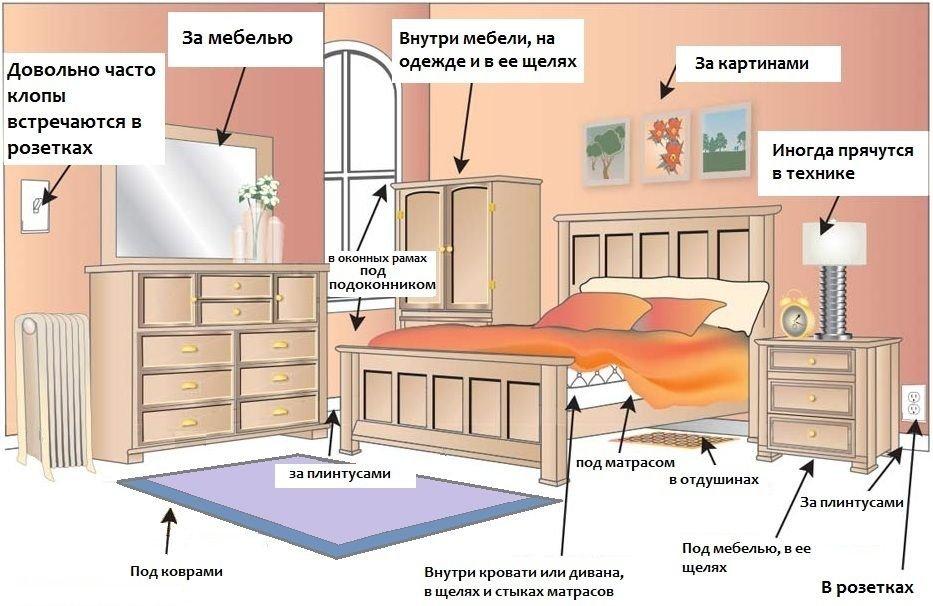 Предполагаемые места обитания постельного клопа