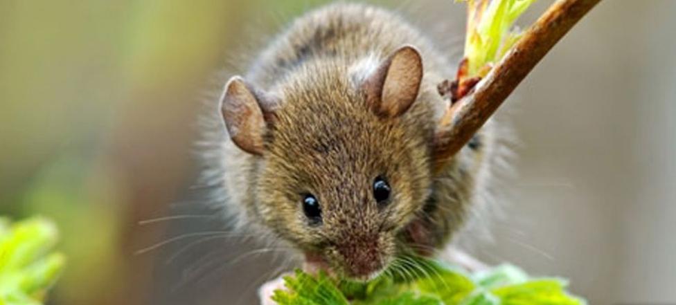 борьба с мышами на садовом участке